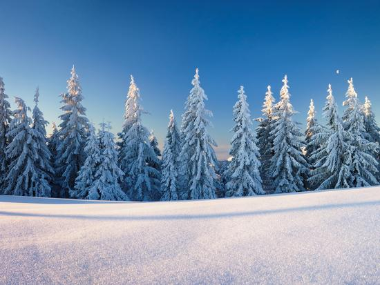 Snow Covered Trees on a Landscape, Belchen Mountain, Black Forest, Baden-Wurttemberg, Germany--Photographic Print