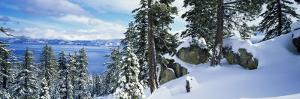 Snow Covered Trees on Mountainside, Lake Tahoe, Nevada, USA