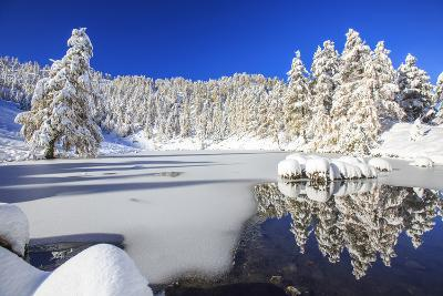 Snow Covered Trees Reflected in the Casera Lake-Roberto Moiola-Photographic Print