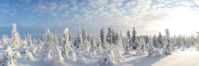 Snow Covered Trees, Riisitunturi National Park, Lapland, Finland-Peter Adams-Photographic Print