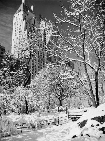 Snow-Covered Trees--Photographic Print