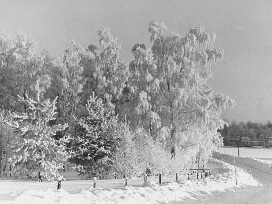 Snow Covering Countryside Northeast of Lake Ladoga-Carl Mydans-Photographic Print