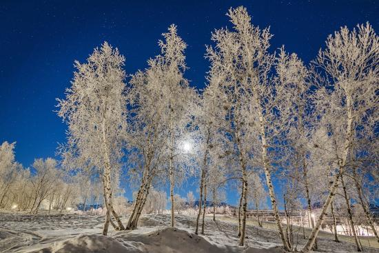 Snow Crystals on Trees in Winter, Lapland, Sweden-Arctic-Images-Photographic Print
