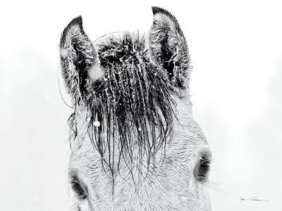 https://imgc.artprintimages.com/img/print/snow-daze-ii-crop_u-l-pql02t0.jpg?p=0