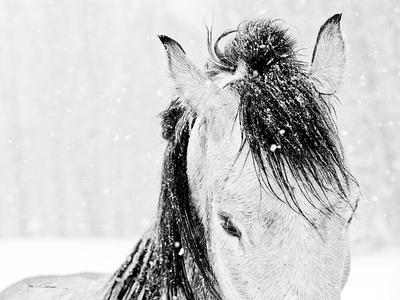 https://imgc.artprintimages.com/img/print/snow-daze-iii-crop_u-l-q10wbwf0.jpg?p=0