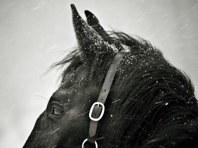 Snow Daze IV Crop-Lisa Cueman-Photographic Print