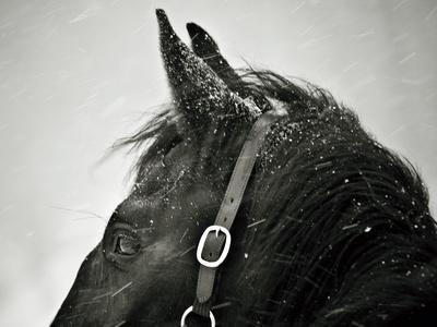 https://imgc.artprintimages.com/img/print/snow-daze-iv-crop_u-l-q10wbxj0.jpg?p=0