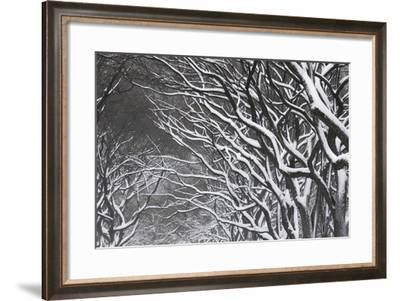 Snow Laden Trees in Central Park-Kike Calvo-Framed Photographic Print