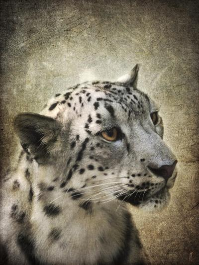 Snow Leopard Portrait-Jai Johnson-Giclee Print