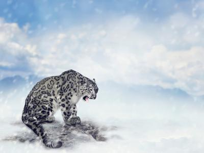 Snow Leopard Sitting on the Rock-Svetlana Foote-Photographic Print