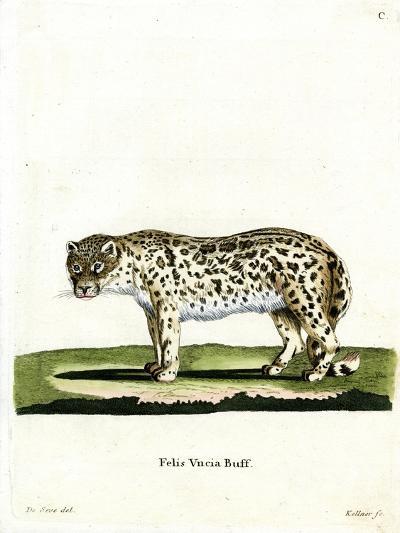 Snow Leopard--Giclee Print