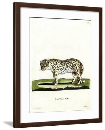 Snow Leopard--Framed Giclee Print
