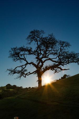 https://imgc.artprintimages.com/img/print/snow-moon-setting-over-novato-marin-hills-countryside-oak-tree_u-l-q1adqp50.jpg?p=0
