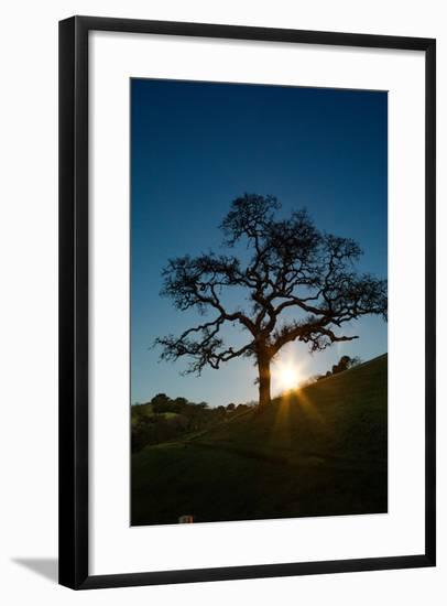 Snow Moon Setting Over Novato Marin Hills Countryside Oak Tree-Vincent James-Framed Photographic Print