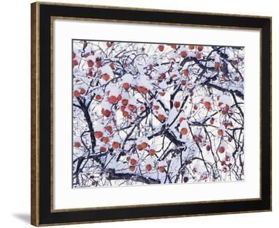Snow on the Tree-WizData-Framed Photographic Print