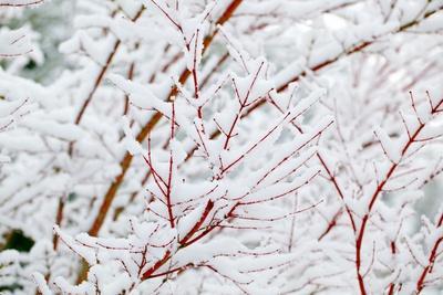 https://imgc.artprintimages.com/img/print/snow-on-tree_u-l-pzpr7r0.jpg?p=0