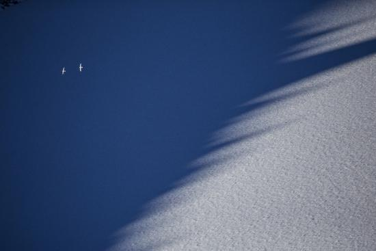 Snow Petrels Soar Above Snow Drifts in the Wohlthat Mountains in Antarctica's Queen Maud Land-Cory Richards-Photographic Print