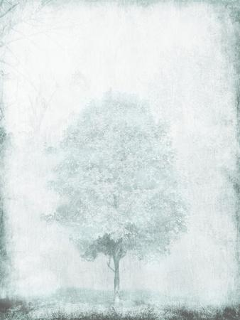 https://imgc.artprintimages.com/img/print/snow-tree_u-l-q1bqw1t0.jpg?p=0