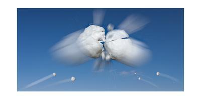 https://imgc.artprintimages.com/img/print/snowball-flight_u-l-q1ar7vv0.jpg?p=0
