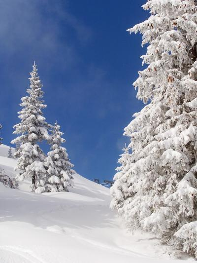 Snowcovered landscape--Photographic Print