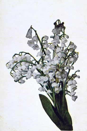 Snowdrop, French Flower Postcard, C1900--Giclee Print
