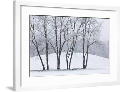 Snowfall at Woodlawn, a Tract of Upland Meadows and Woods-Michael Melford-Framed Photographic Print