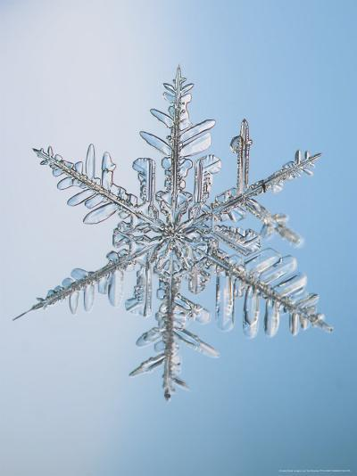 Snowflake, Close Up-Edward Kinsman-Photographic Print