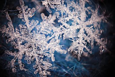 https://imgc.artprintimages.com/img/print/snowflake-crystal-natural-snow_u-l-q1a31jf0.jpg?p=0