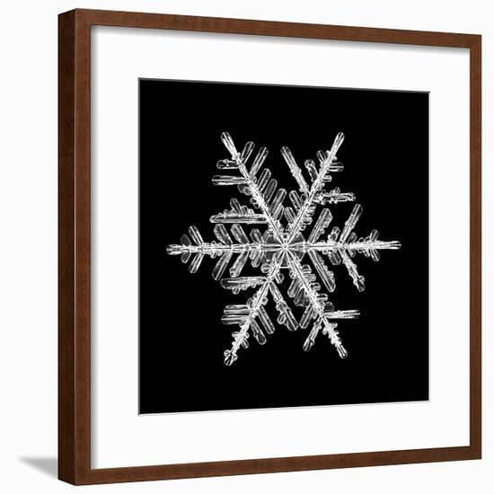 Snowflake Isolated on a Black Background Natural-Kichigin-Framed Photographic Print