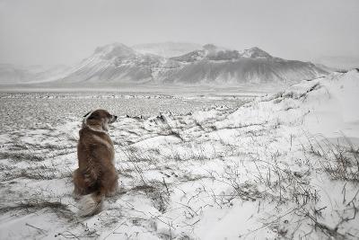 Snowstorm-Bragi Ingibergsson --Photographic Print