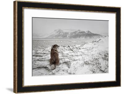 Snowstorm-Bragi Ingibergsson --Framed Photographic Print
