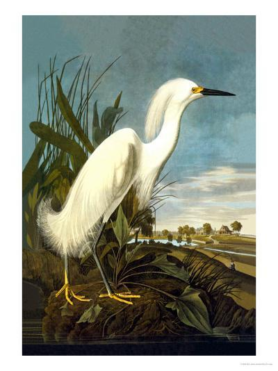 Snowy Egret-John James Audubon-Art Print