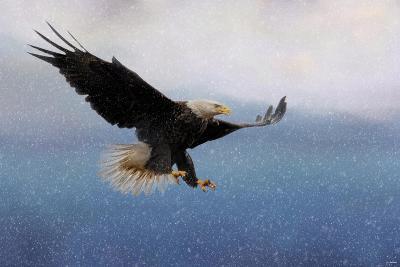 Snowy Flight Bald Eagle-Jai Johnson-Giclee Print