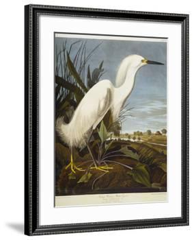 Snowy Heron or White Egret / Snowy Egret-John James Audubon-Framed Premium Giclee Print