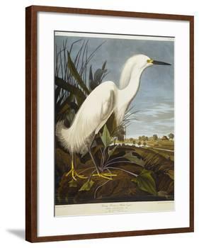 Snowy Heron or White Egret / Snowy Egret-John James Audubon-Framed Giclee Print