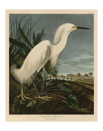 https://imgc.artprintimages.com/img/print/snowy-heron-or-white-egret_u-l-f8ckhr0.jpg?p=0