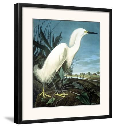 Snowy Heron-John James Audubon-Framed Giclee Print