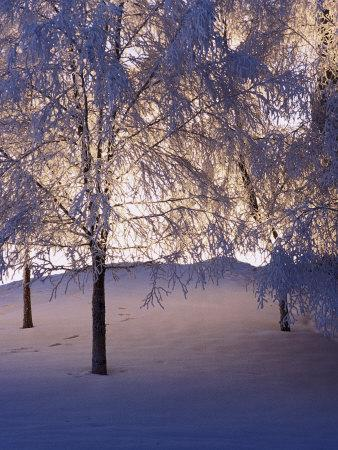 https://imgc.artprintimages.com/img/print/snowy-light-trees-anchorage-alaska_u-l-p3drxi0.jpg?p=0