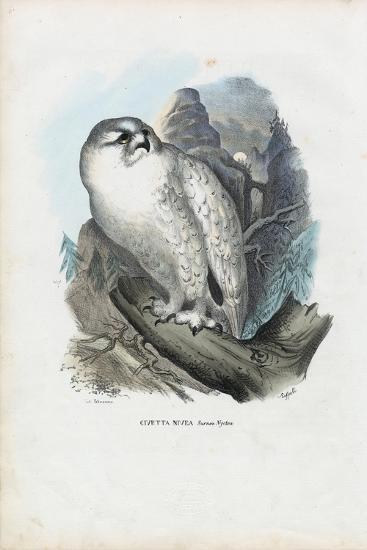 Snowy Owl, 1863-79-Raimundo Petraroja-Giclee Print