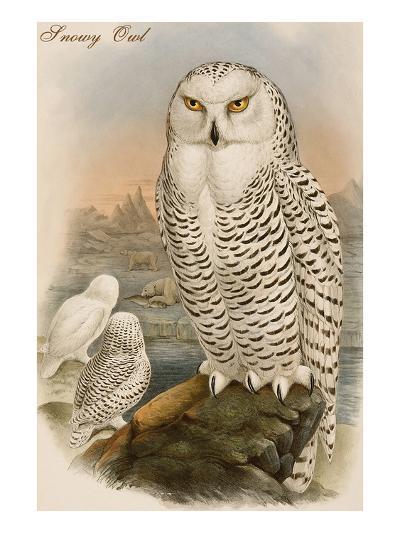Snowy Owl-John Gould-Art Print