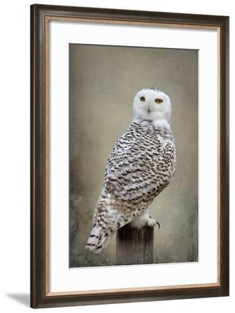 Snowy Owl-Larry McFerrin-Framed Photo
