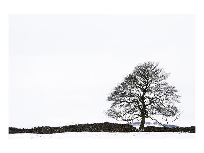 Snowy Peaks-Chris Farrow-Art Print