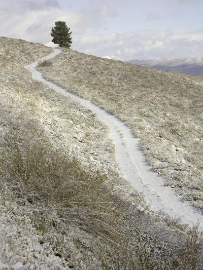 Snowy ranch road and lone tree in Inyo National Forest-John Eastcott & Yva Momatiuk-Photographic Print