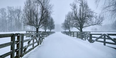 Snowy Road II-James McLoughlin-Photographic Print