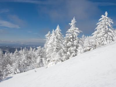 Snowy Trees on the Slopes of Mount Cardigan, Canaan, New Hampshire, USA-Jerry & Marcy Monkman-Photographic Print
