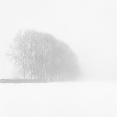 Snowy Trees-Doug Chinnery-Photographic Print