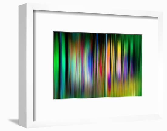 So Many Trees-Ursula Abresch-Framed Photographic Print