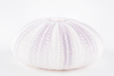 https://imgc.artprintimages.com/img/print/so-pure-collection-natural-mauve-sea-urchin-shell_u-l-q1g8pn20.jpg?p=0