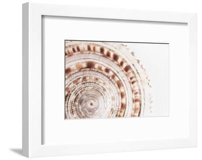 So Pure Collection - Natural Swirl Sundial Sea Shell II-Philippe Hugonnard-Framed Photographic Print