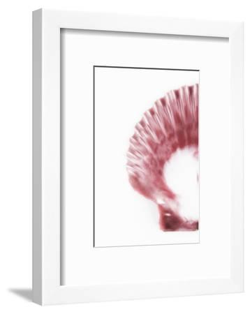 So Pure Collection - Pink Scallop Seashell II-Philippe Hugonnard-Framed Photographic Print